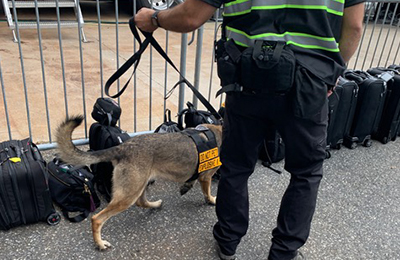 Explosive Detection Dog Services by 3DK9 Detection Services